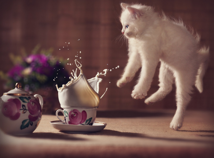 cat_and_tea_cup