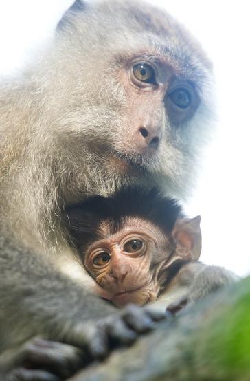 little_monkey